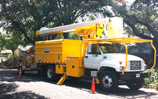 Ray Williamson Tree Service 60
