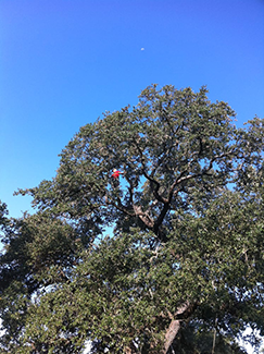 Trees need protection, repair, and maintenance.  Have your trees inspected on a regular basis to prevent problems.